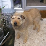 Pet2Us Kennel and Cattery Testimonials
